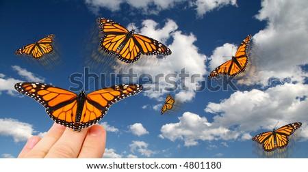 Releasing monarch butterflies - stock photo