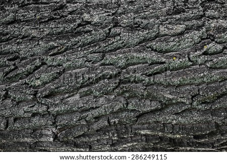 relief bark of an old tree close-up background - stock photo