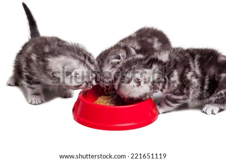 Reloading their energy. Three little kittens eating cat food from the one bowl while sitting close to each other - stock photo
