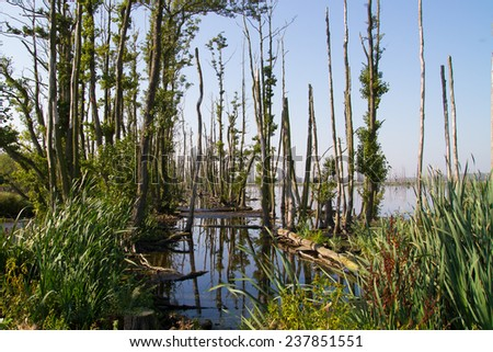 renaturated polder in germany - stock photo