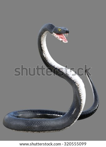 Rendered illustration of black snake with bared fangs isolated