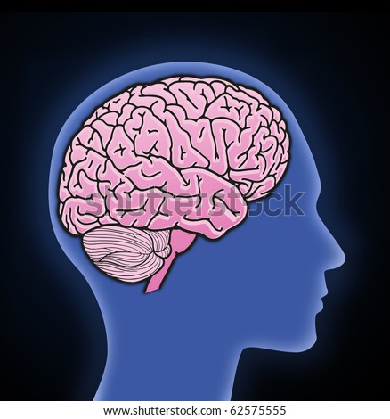Rendered profile view of a human brain - stock photo