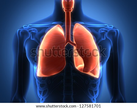 Rendering Intestinal internal organs - stock photo