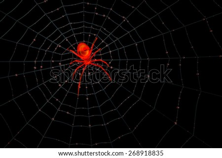Rendering of a red transparent spider on his web waiting for game.  Play with different color by changing hue.  - stock photo