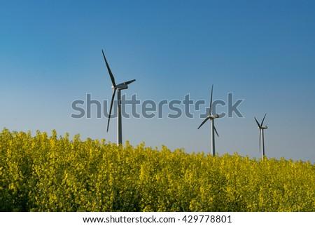 Renewable energy - wind turbines on yellow rapeseed against blue sky - stock photo