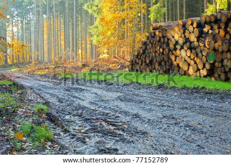 Renewable resource forest ready to harvest: deep machinery markings in mud and pile of logs. - stock photo