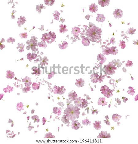 repeatable floral breeze of 92 different ornamental sakura blossoms and petals, studio photographed and isolated on absolute white - stock photo