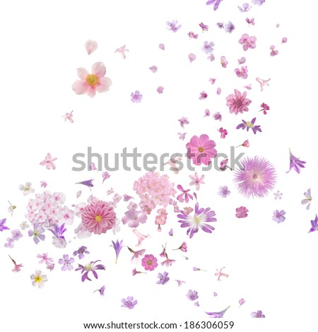 repeatable pink blossom breeze of many different flying flower buds and petals, in depth of field, isolated on absolute white  - stock photo