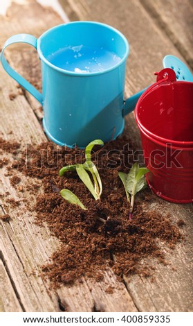 Replacing of seedling, several young green sprouts lie on a soil small group. Nearby agricultural tools: bucket and watering can
