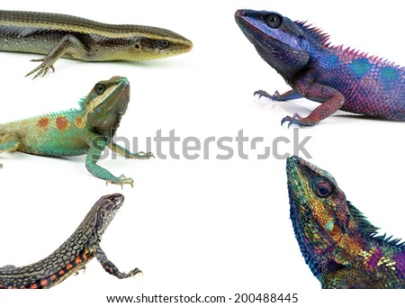 reptile collection isolated on white background - stock photo