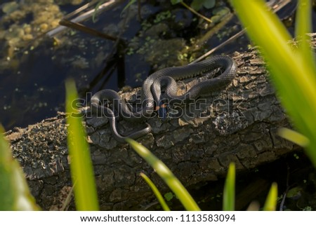 stock-photo-reptile-in-the-habitat-wild-