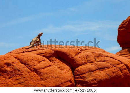 Reptile sitting on rock in dry dessert landscape