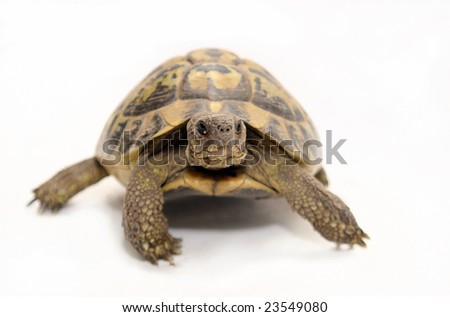 Reptile turtle that walks,Reptile and amphibians