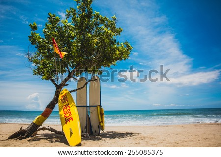 Rescue boards stay under the tree on sand beach with blue sea and blue sky on background horizontal - stock photo