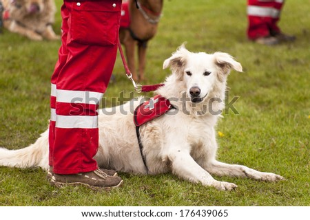 Rescue Dog of a Dog Squadron - stock photo