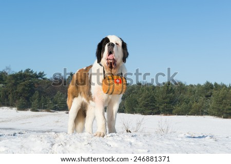Rescue dog with wooden barrel  - stock photo