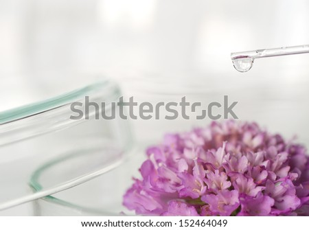Research on plants - stock photo