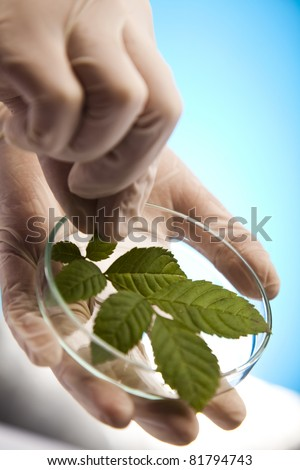 Research, plants growing in test tubes in a research laboratory - stock photo