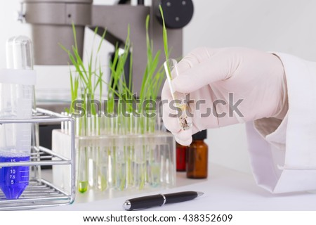 Research scientist and wheat diseases of wheat in the lab - stock photo