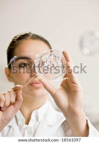 Research scientist testing specimen in petri dish in laboratory - stock photo