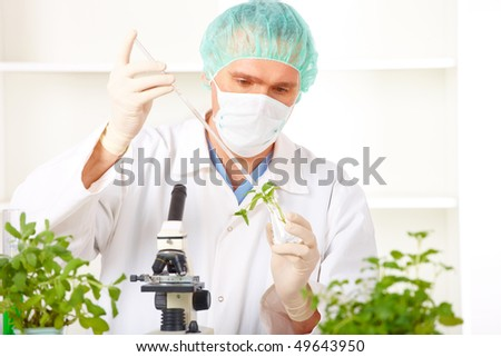 Researcher holding up a GMO plant. Genetically modified organism or GEO here transgenic plant is an plant whose genetic material has been altered using genetic engineering techniques - stock photo