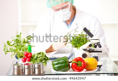 Researcher with GMO plants. Genetically modified organism or GEO here transgenic plant is an plant whose genetic material has been altered using genetic engineering techniques. Focus is on plants. - stock photo