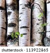 Reserves of birch logs closeup - stock photo