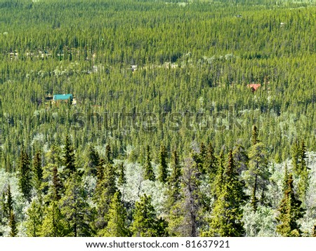 Residential buildings hidden in boreal forest of Yukon Territory, Canada. - stock photo
