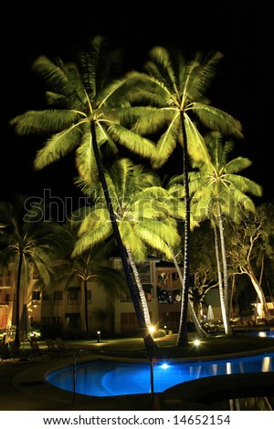 resort palm trees at night