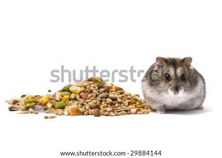 Resource of hamster