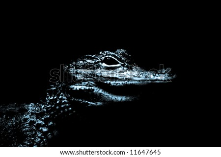 resting alligator in shallow water waiting for a prey - stock photo
