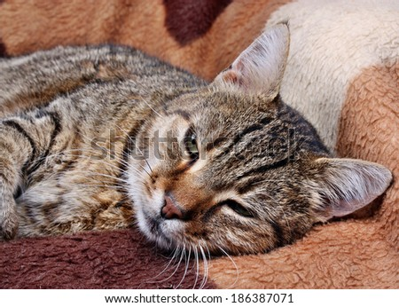 Resting cat lying on the couch - stock photo