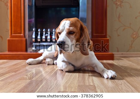 resting dog on wooden floor near to a fireplace - stock photo
