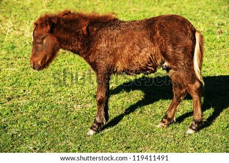 Resting horse - stock photo