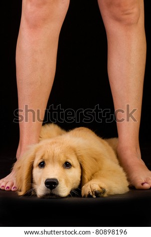 resting puppy - stock photo
