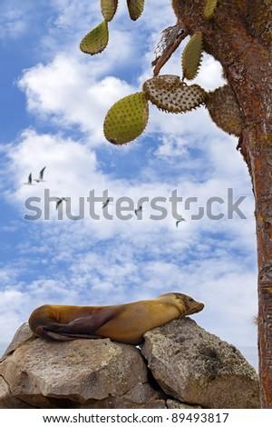 Resting sea lion - stock photo