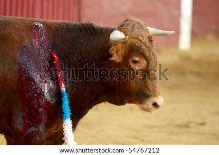 Results of a Bull Fighter stabbing a bull - stock photo