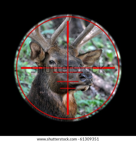 reticle of hunting rifle scope on a bull elk - stock photo