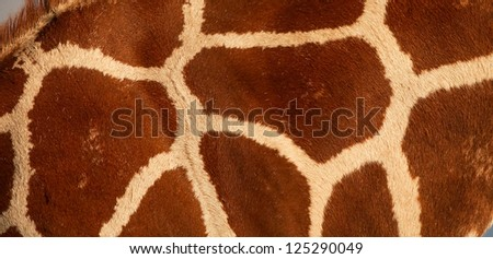 reticulated giraffe pattern - stock photo