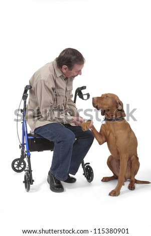 retired man sitting on walker holding a vizsla dogs paw