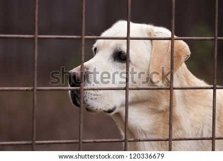 Retriever dog behind a fence - stock photo