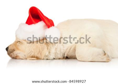 retriever puppy in a Santa Claus hat - stock photo