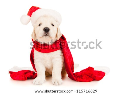 Retriever puppy in a Santa Claus hat, isolated on white - stock photo