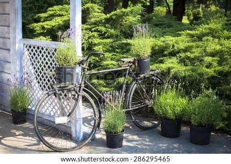 Retro bicycle decorated with flower pots parked by garden house