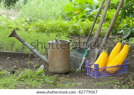 retro design watering can on a vegetable patch