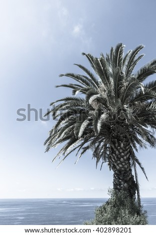 Retro faded style image tropical palms against blue sky. - stock photo