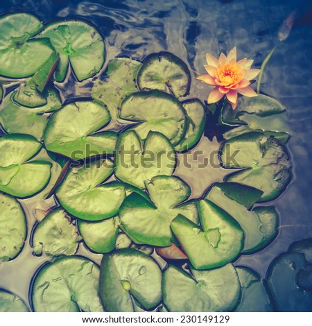 Retro Filter Photo Of Water Lily Pads In A Pond In Hawaii - stock photo