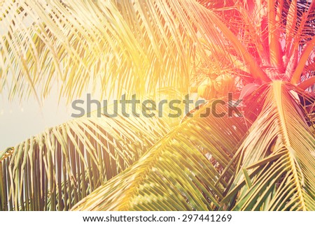 Retro Filtered Palm Trees, as Background with solar effect - stock photo