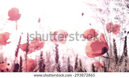 Retro filtered picture of summer meadow with poppy flowers, shallow depth of field. - stock photo