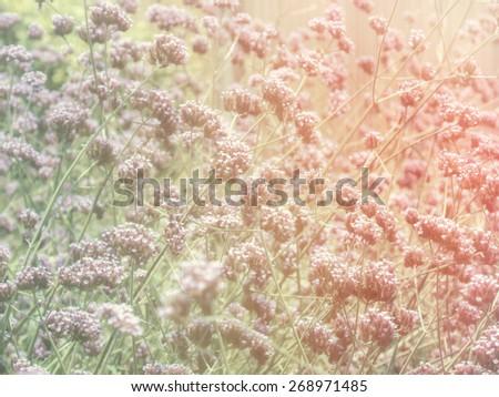Retro flower fields - stock photo